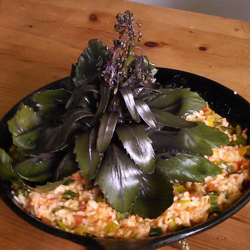 en vakker liten kåldame står på et bed av ris og grønnsaker, servert med blomstersmør av ryllik og kløver