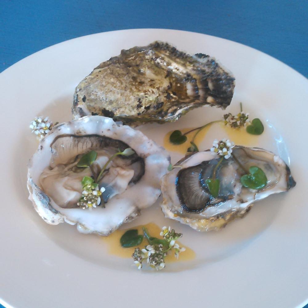 Selvhøstet østers servert med skjørbuksurt og østersmajones