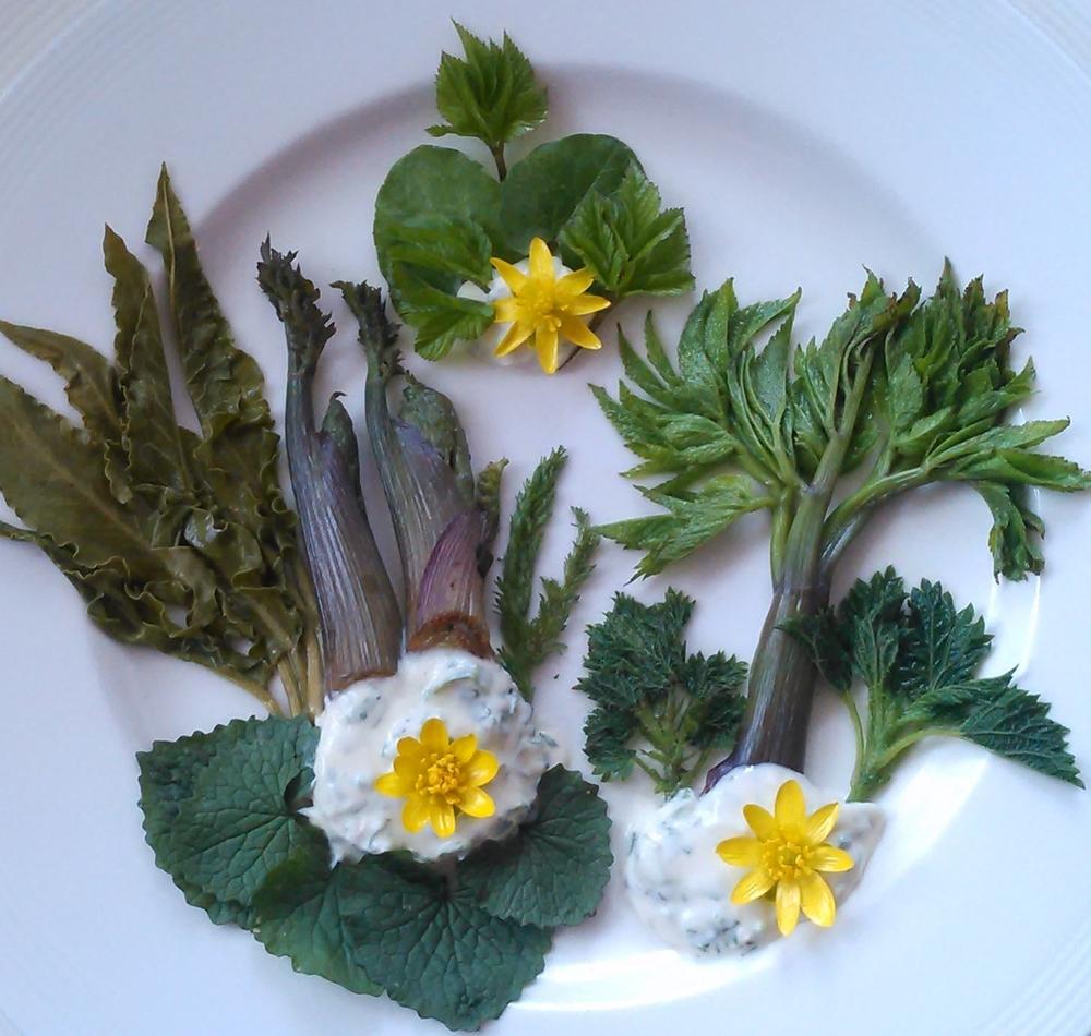 vårens første skudd av ville vekster smaker nydelig rett fra bakken som salat eller lett dampet som grønnsak. Her er dampet høymole, ryllik, brennesle, løpstikke (dyrket) og kvann servert med en hvit saus laget av rømme, høymole og løkurt. Skvallerkål, vårkål, løkurt og blomster av vårkål er det råe på bildet. OBS! noen kan reagere på vårkål med å få en brennende følelse i munnen, unngå å spise planten etter blomstring