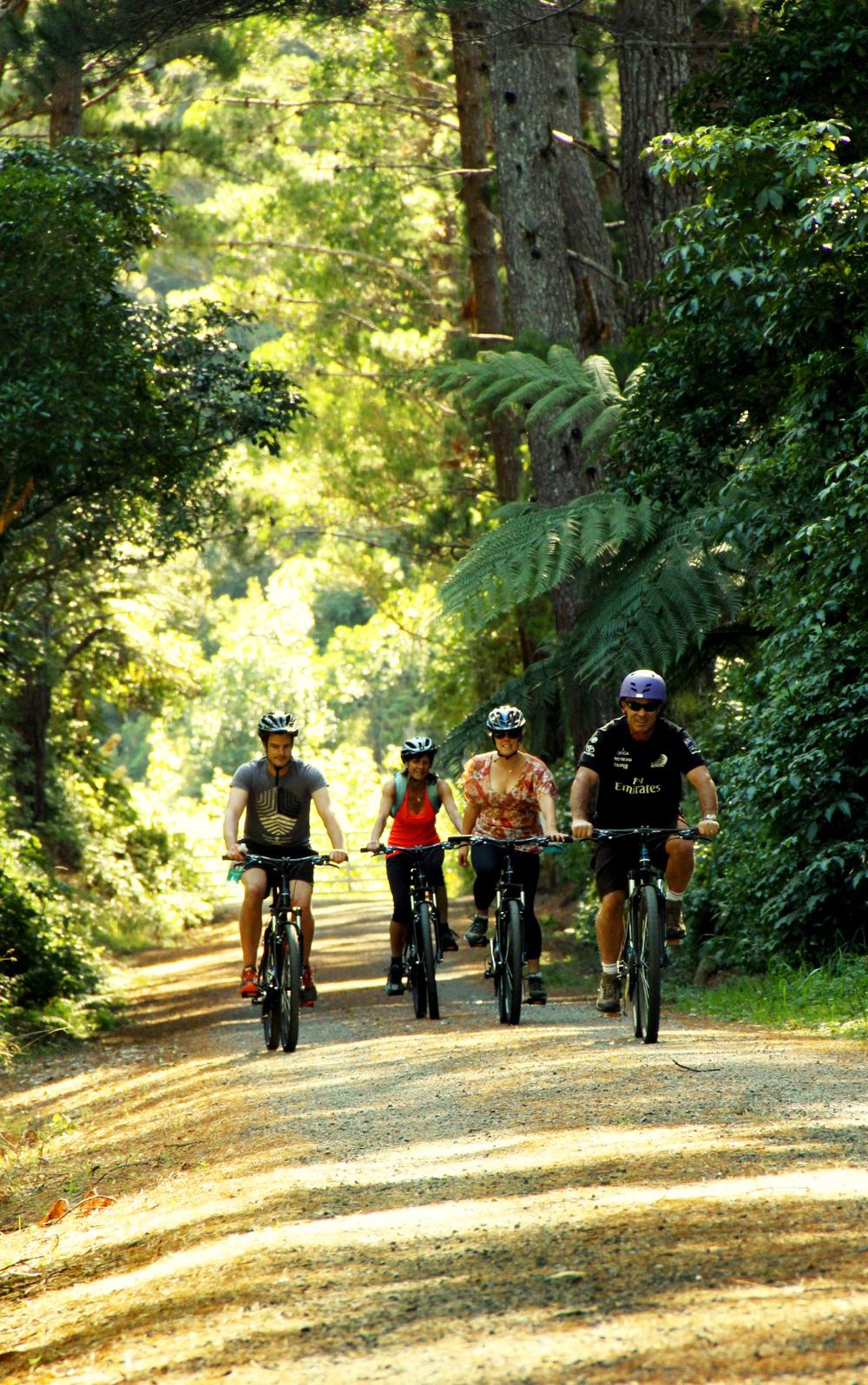 Rimutaka Rail Trail - Pakuratahi Forest.jpg