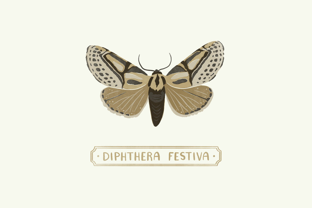 Hieroglyphic Moth1.jpg