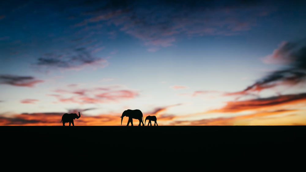 Day 3/365  - Sunset on the Serengeti