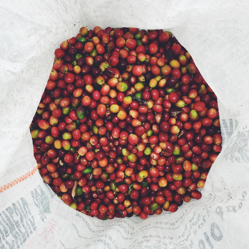 OBELO | Coffee Cherries