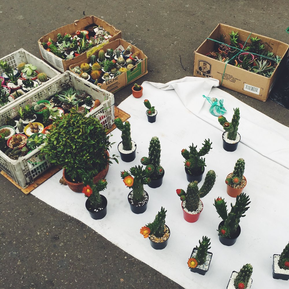 Cactus party on Carrera Séptima