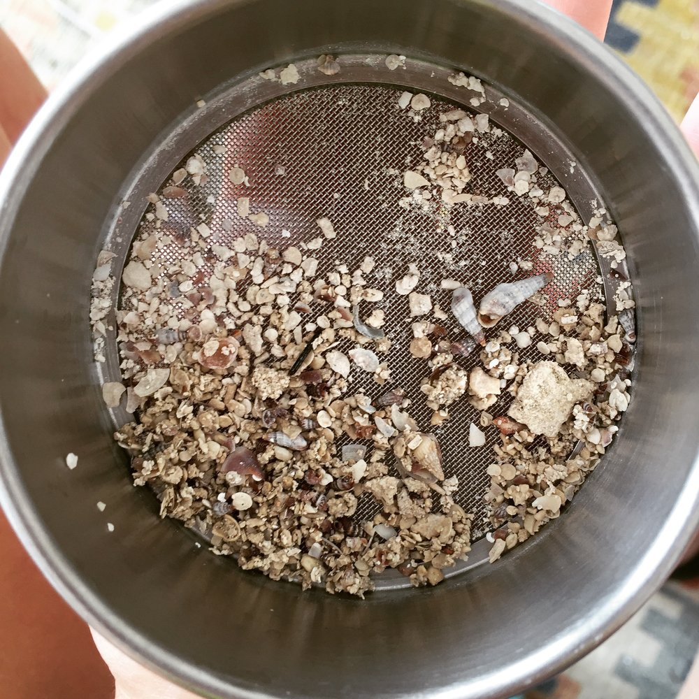 These are coarse beach sediments I collected in the Bahamas. Sediment samples like this were included in the Science Saturday Starters permeability activity.
