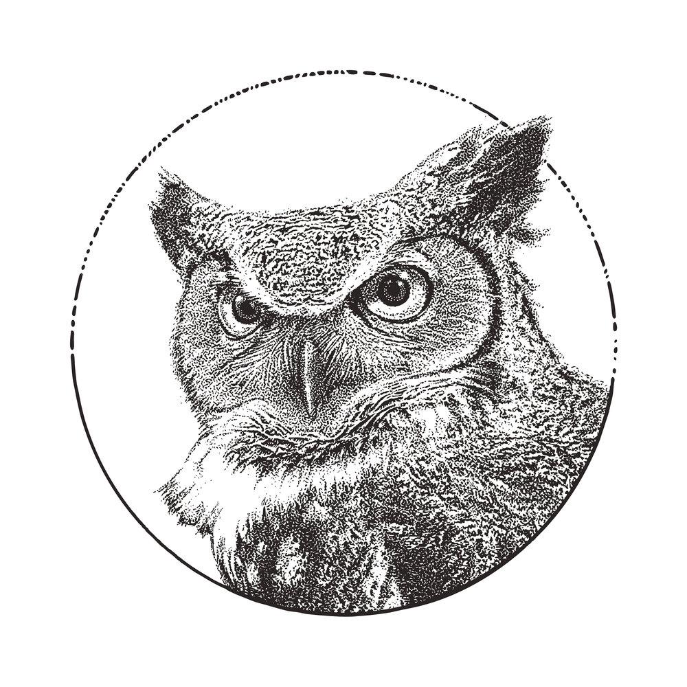Great Horned Owl. International Owl Center. Houston, Minnesota