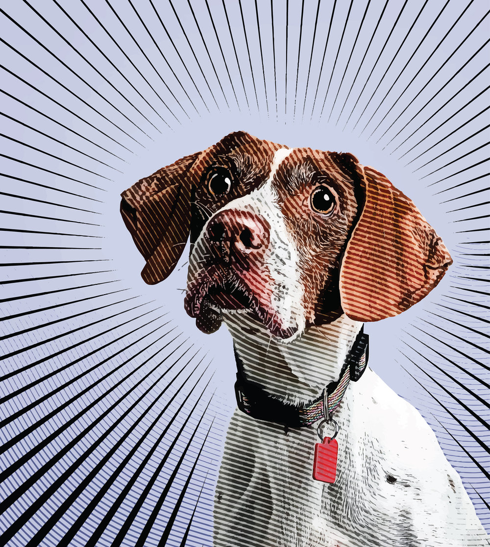 Dog Pointer 3375 Color.jpg
