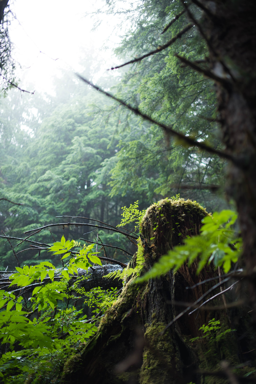 forestinventory.rock-2611.jpg