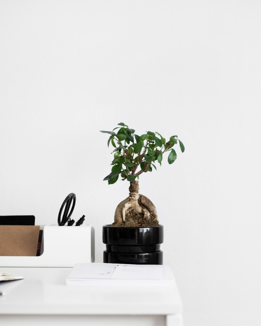 should you start a blog white desk with plants