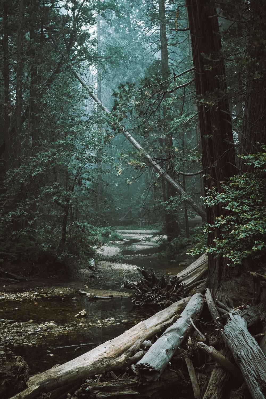 Forest_creak_web.jpg