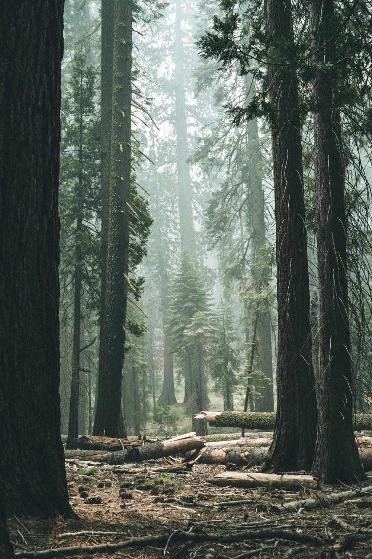 forest_broken_trees_web.jpg