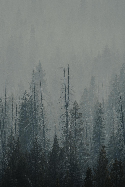 forest_fog_web.jpg