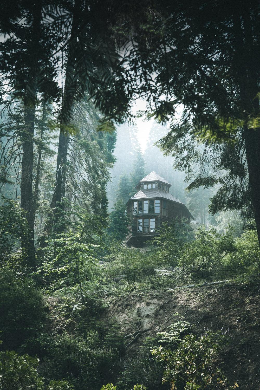 House_Green_For_web.jpg