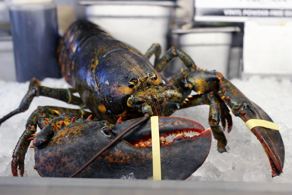 This maine lobster is waiting for you.