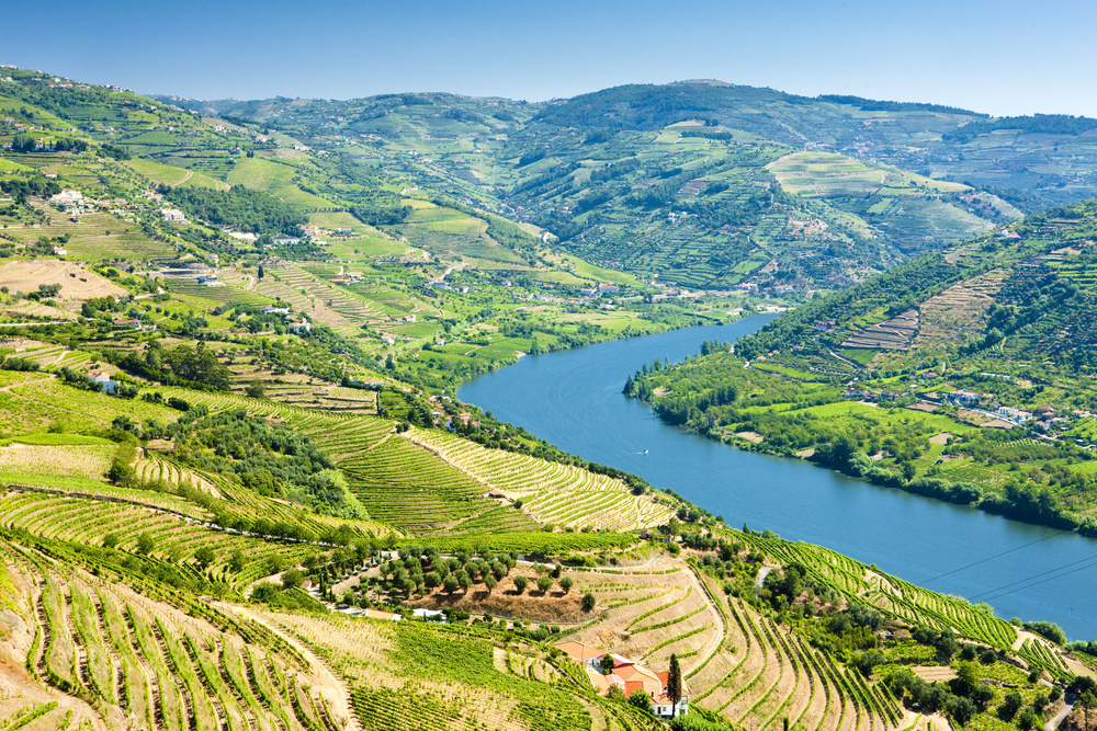 The Douro Valley, Vineyards