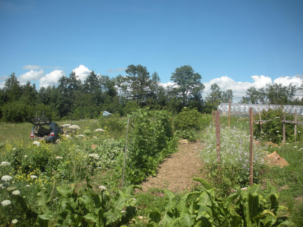 Highly diversified and integrated , our biggest focus in years past has been mixed vegetable production, either going to wholesale or CSA. All annual beds (roughly an acre) are either currently in or transitioning towards a no-till system, which is strongly reliant on cover cropping, rotations, animal integration, mulching, a diverse array of homemade foliar sprays, prompt, observant and critical management, and faith in the biology below us.