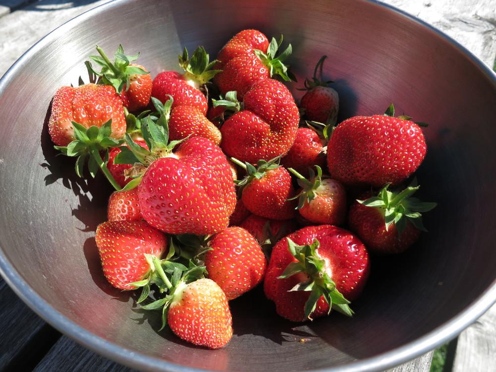 crops, Straeberries.JPG