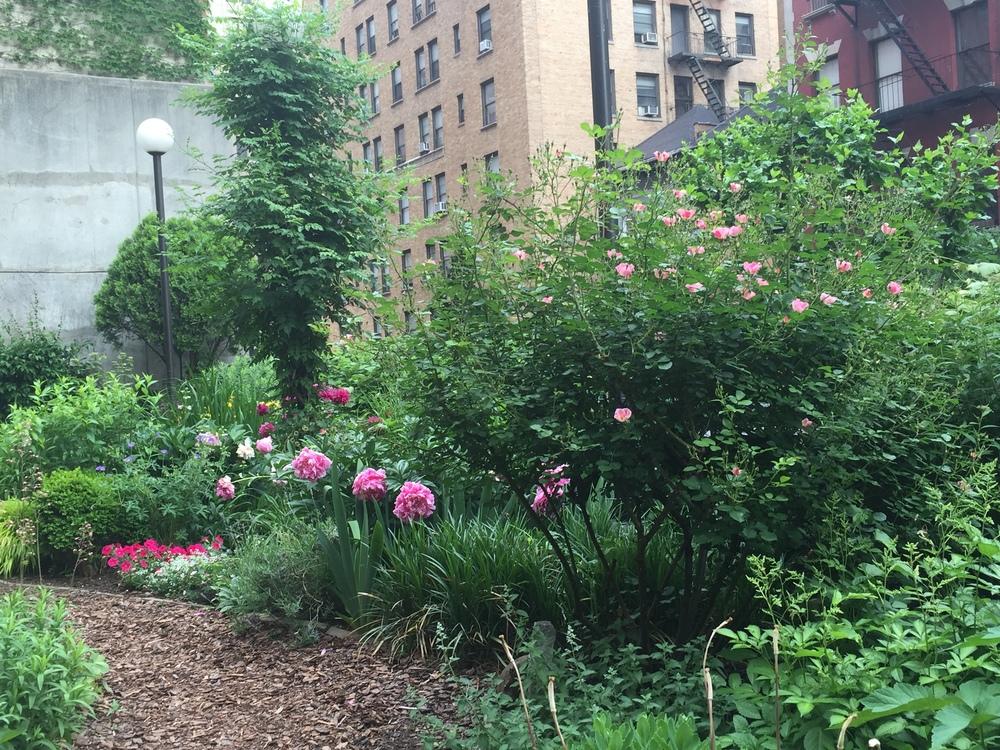 Roses & peonies & geraniums...oh, my!