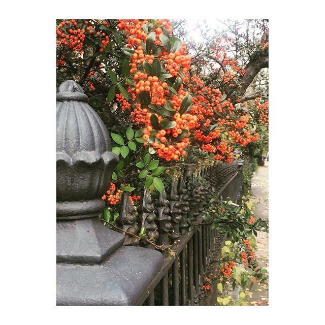 Grateful for nature's #beauty and #abundance 🙏🏻🍂🌿#clintonhill #brooklyn #neighborhood #gratitude