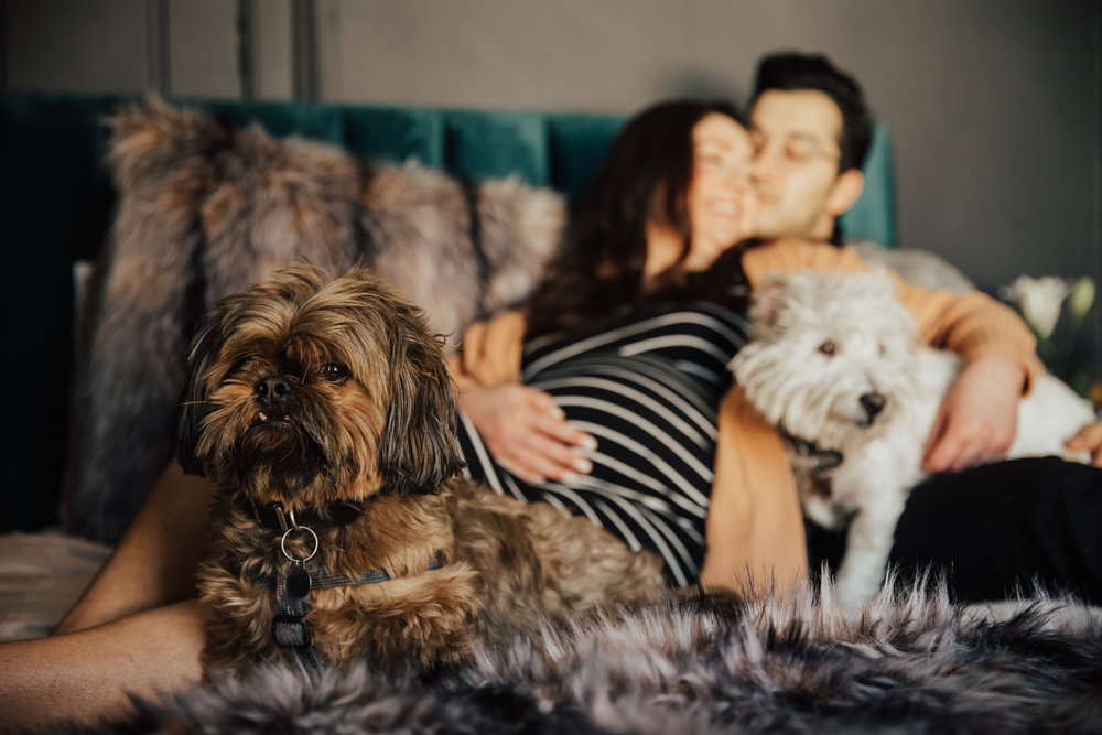 in-home maternity session with dogs