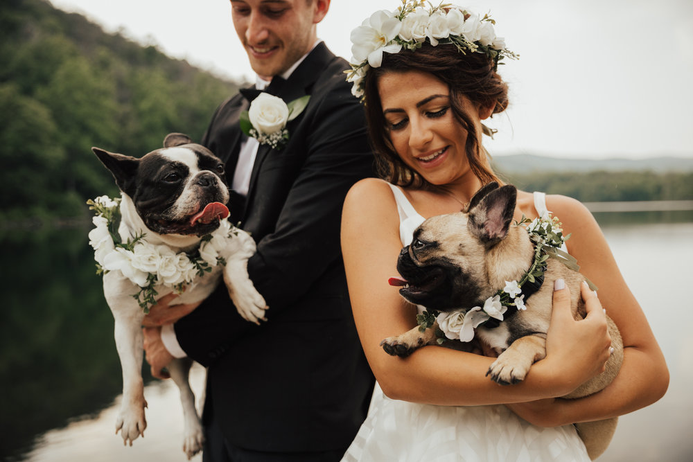 wedding dogs with flower crowns