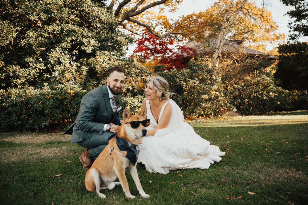 funny bride and groom dog photo