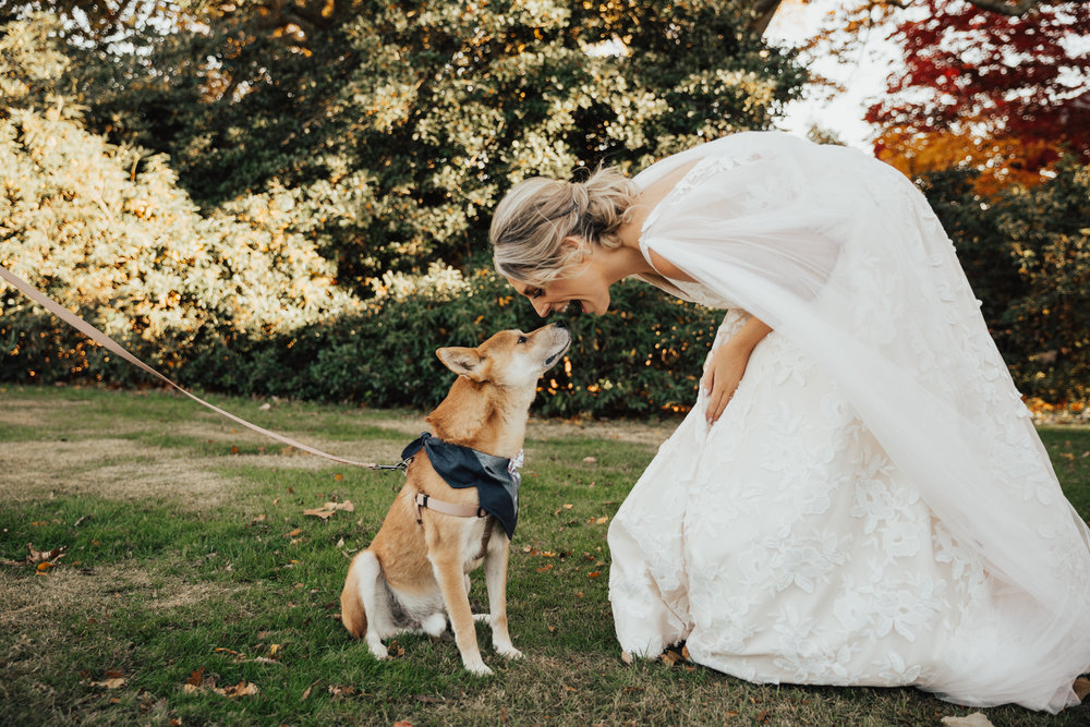 dog with bride wedding day