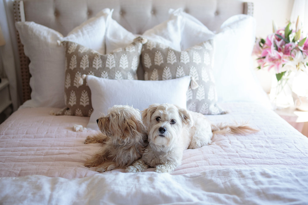 Master Bedroom Makeover with Maltipoo and Schnorkie.jpg