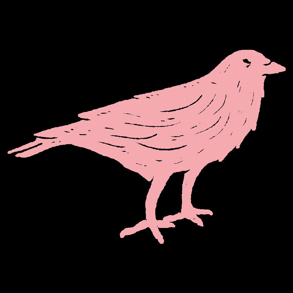 WC_Logo_Crow_Pink.png