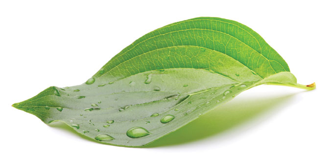 bigstock_green_leaf_with_water_drops_16253147.jpg