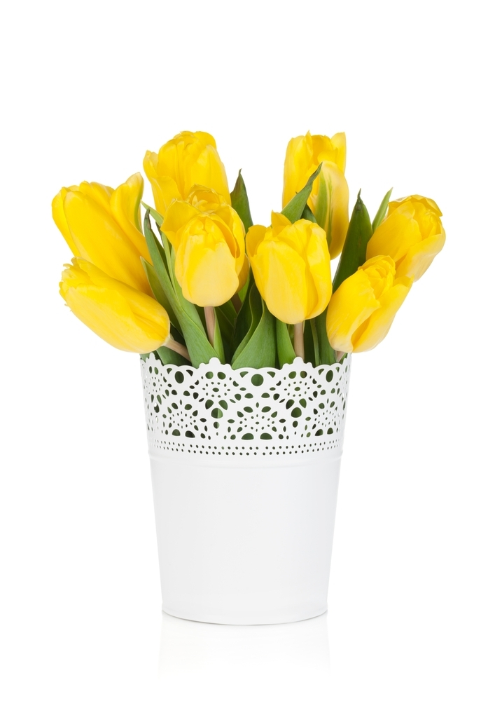 tulipsb.JPG