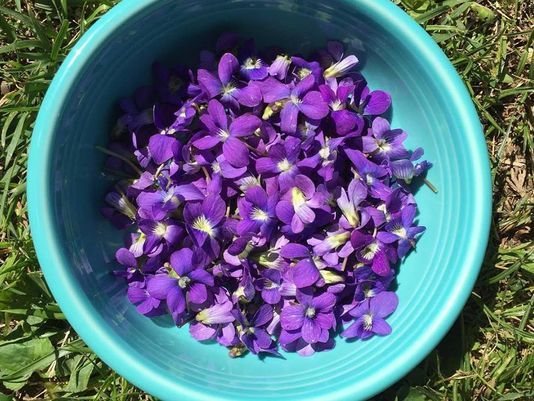 3 edible wildflowers in your backyard the lotus room ayurveda who knew those bright purple flowers speckling the lawn are more than just a pretty sight mightylinksfo