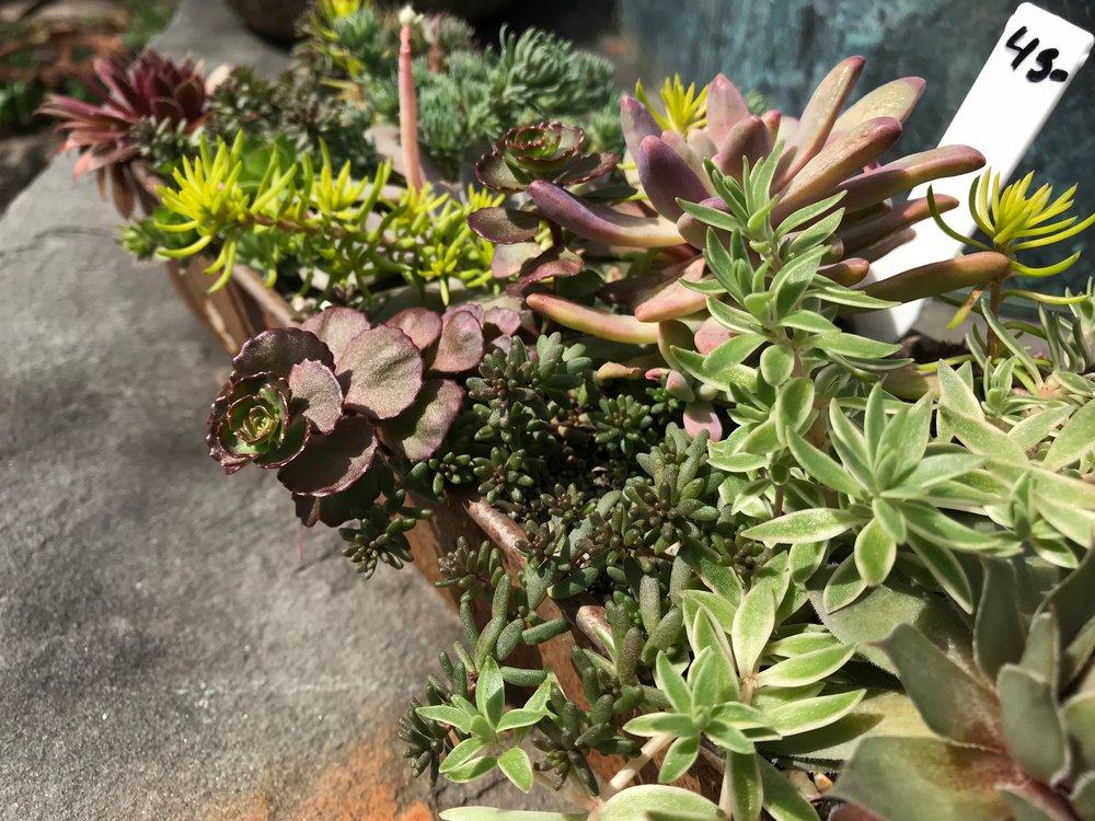 succulents, hudson, ny