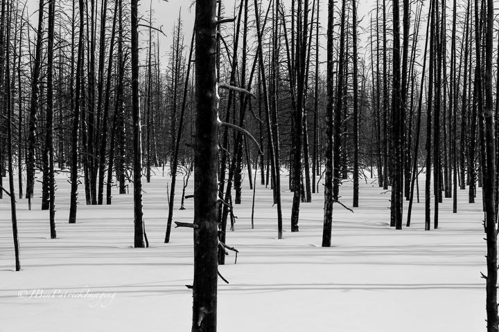 Yellowstone-8.jpg