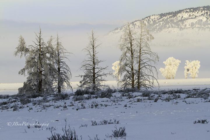 Yellowstone-70.jpg