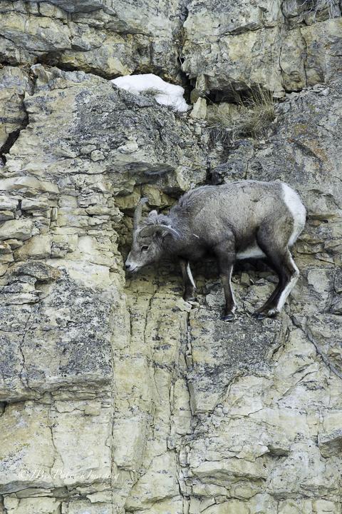 Yellowstone-76.jpg