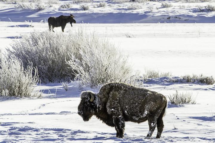 Yellowstone-81.jpg