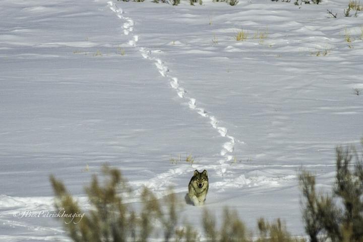 Yellowstone-87.jpg