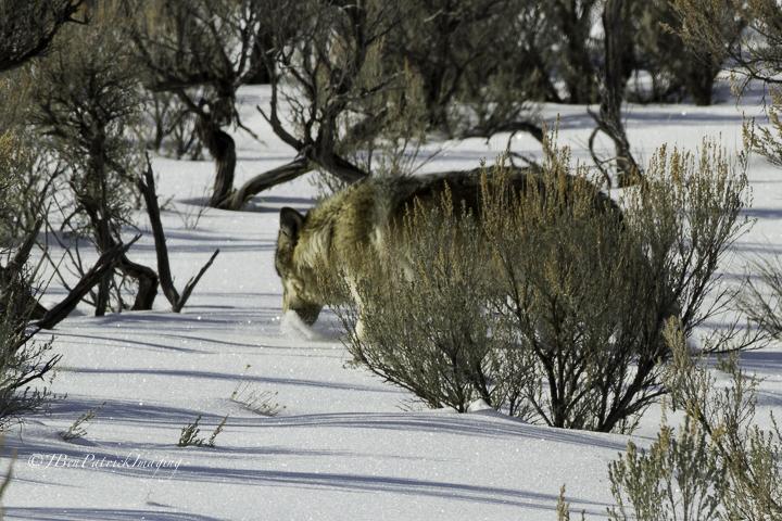 Yellowstone-89.jpg