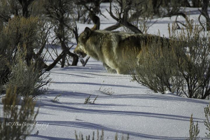Yellowstone-90.jpg