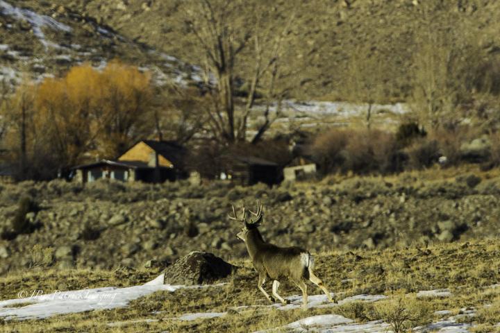 Yellowstone-93.jpg