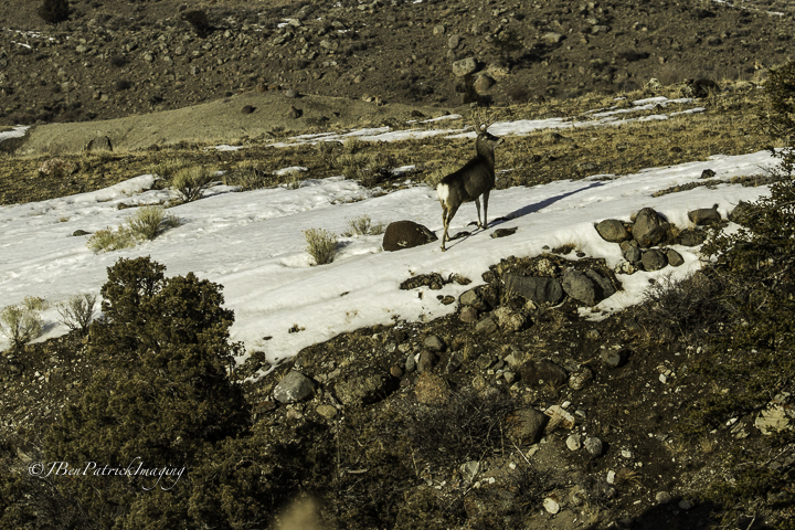 Yellowstone-96.jpg
