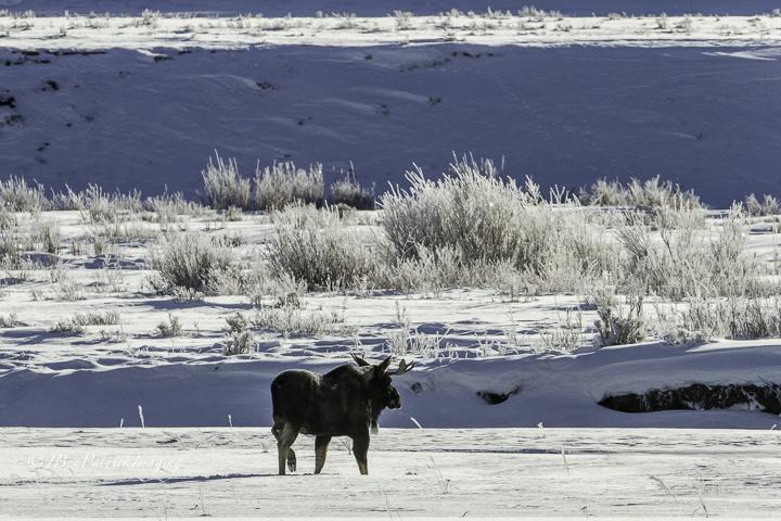 Yellowstone-97.jpg