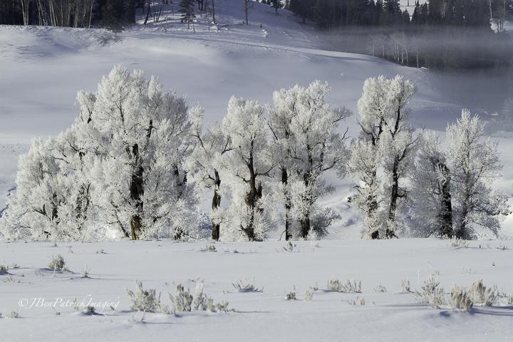 Yellowstone-98.jpg