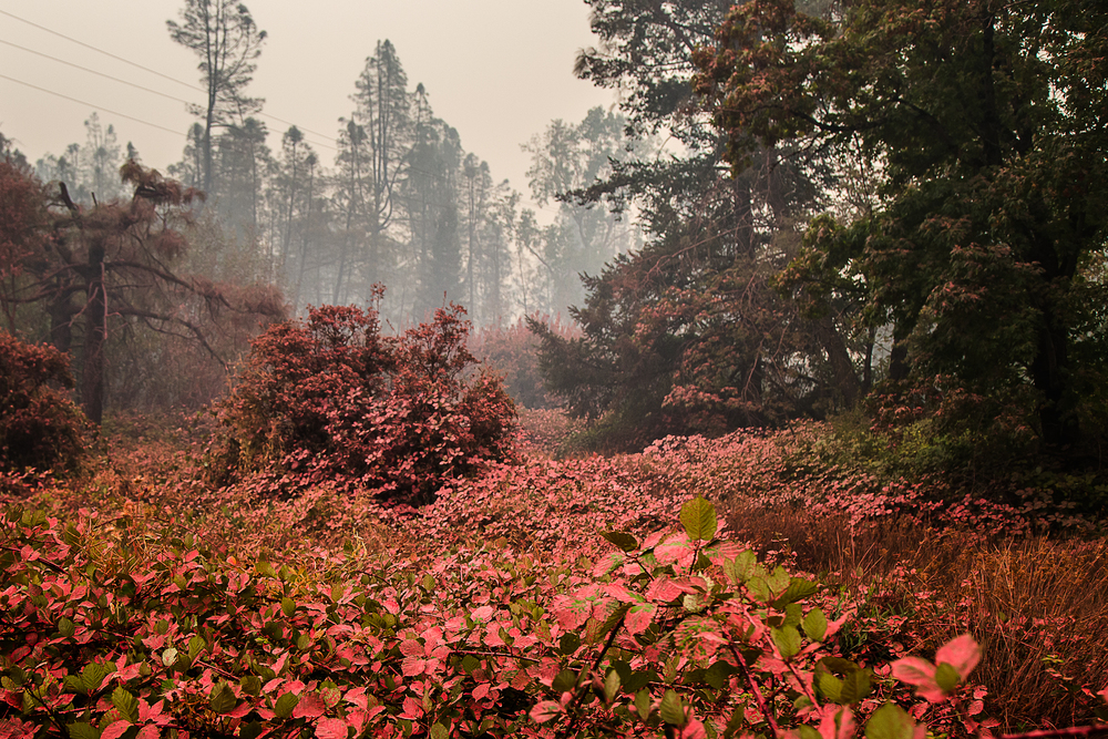 Whispering Pines, Cobb
