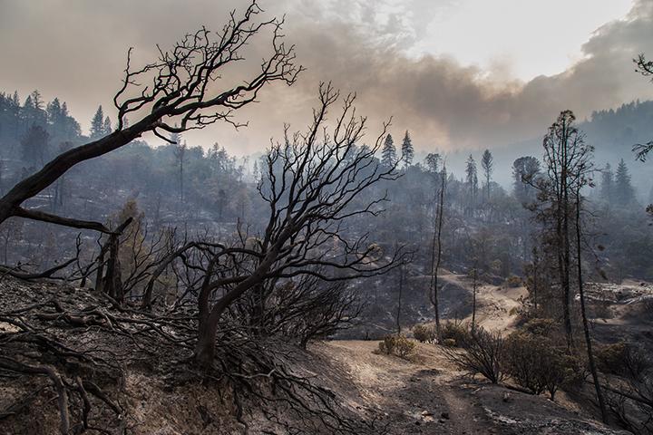 ©nathandehart-valleyfire2015-6.jpg
