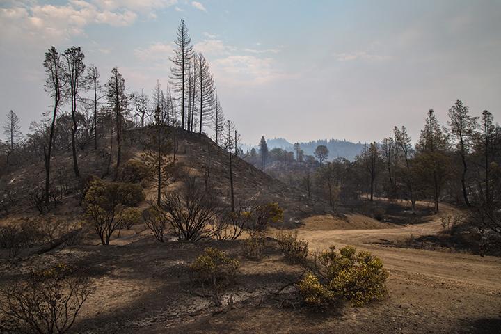 ©nathandehart-valleyfire2015-10v2.jpg