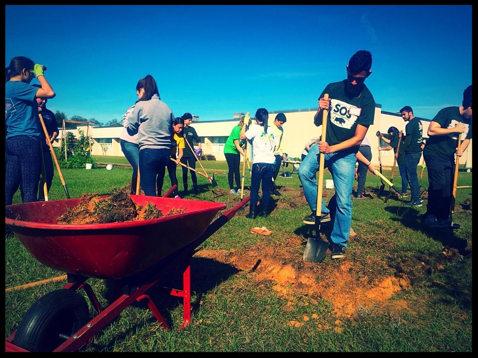 August 2015, USF Stampede of Service students dig out the compacted soil to prepare the ground for new agriculture student garden beds.