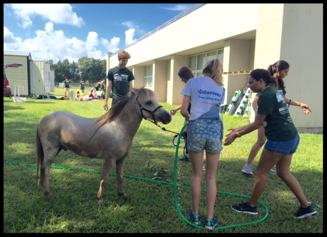 USF freshman student workday. TTF2S organized teams to clean out the sheds and wash rebel and mystic, the miniature horses.