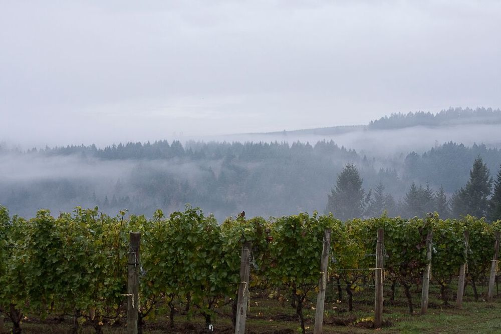 Estate Vineyard (good for website).jpg